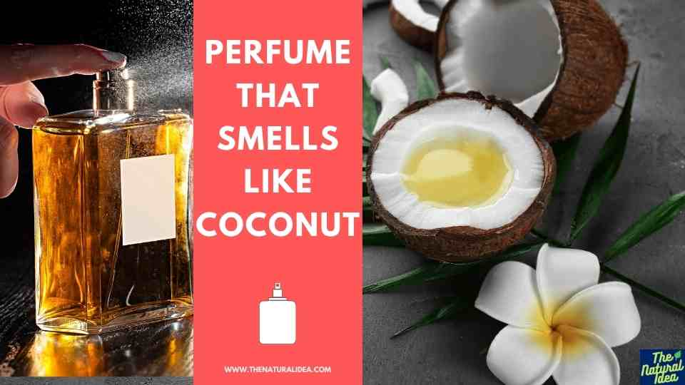 Perfume That Smells Like Coconut 1